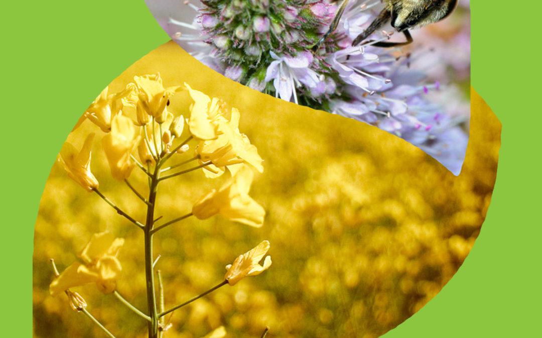 Distribution de semences – dimanche 20 mai 2012